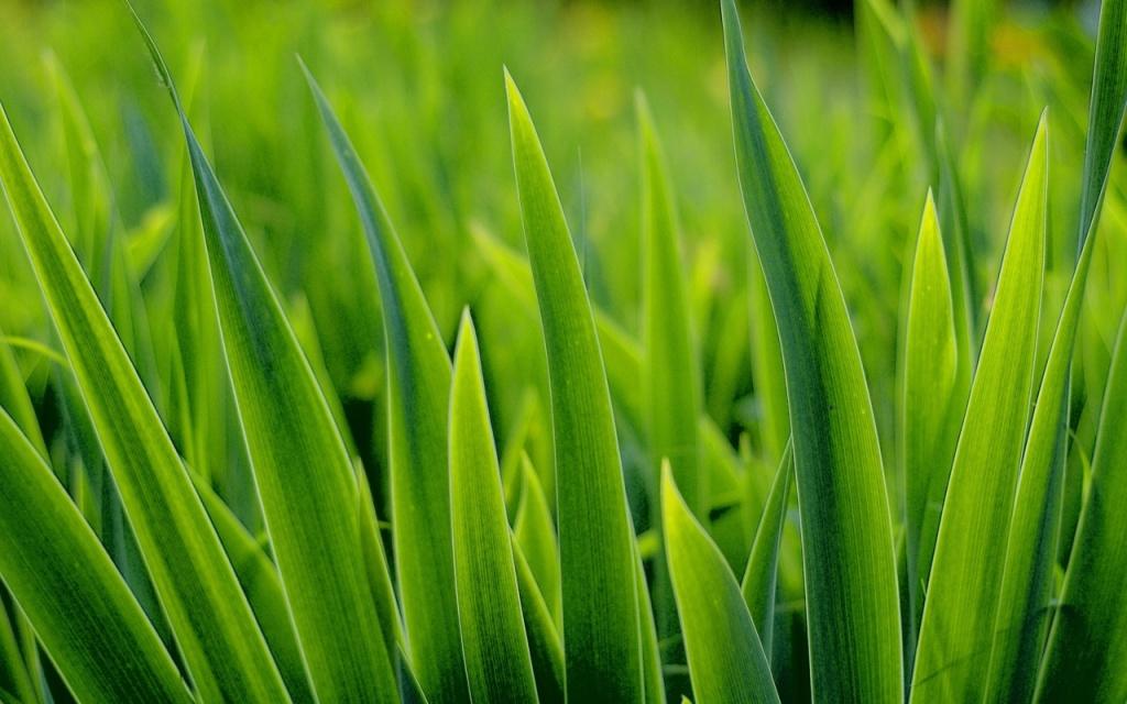 01022_grass
